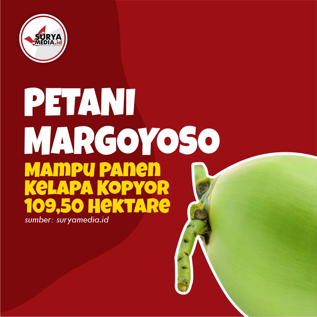 Petani Margoyoso Mampu Panen Kelapa Kopyor 109,50 Hektare A