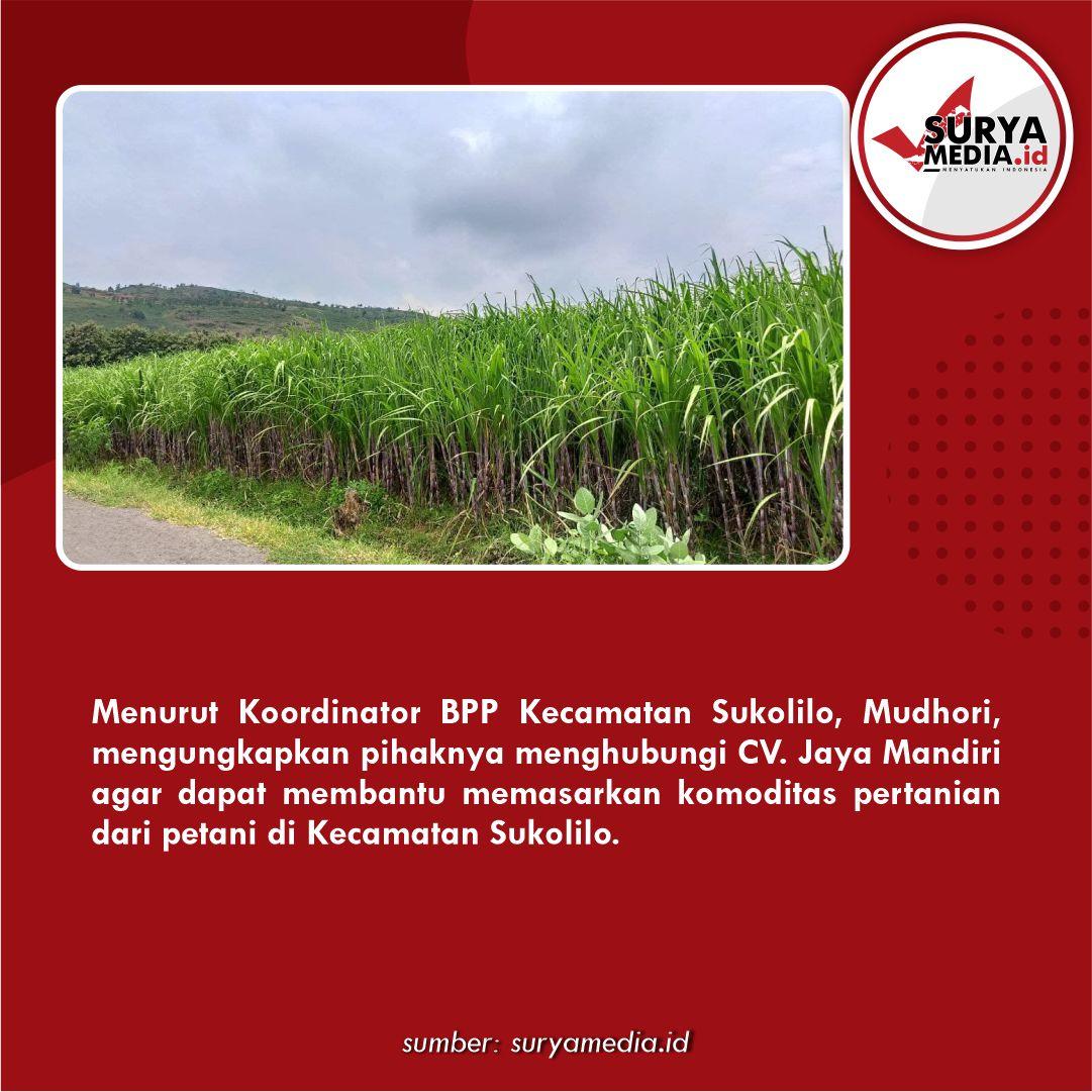 BPP Sukolilo Jalin Kemitraan untuk Pasarkan Hasil Pertanian C