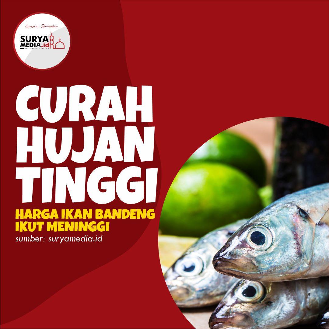 Curah Hujan Tinggi, Harga Ikan Bandeng Ikut Meninggi A