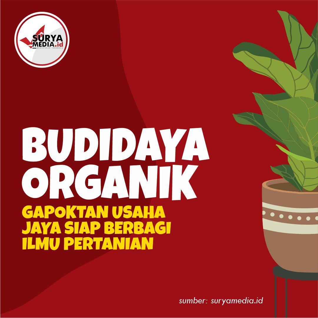 Budidaya Organik, Gapoktan Usaha Jaya Siap Berbagi Ilmu Pertanian A