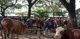 PRIORITAS PEMBAGIAN DAGING KURBAN BAGI WARGA ISOMAN