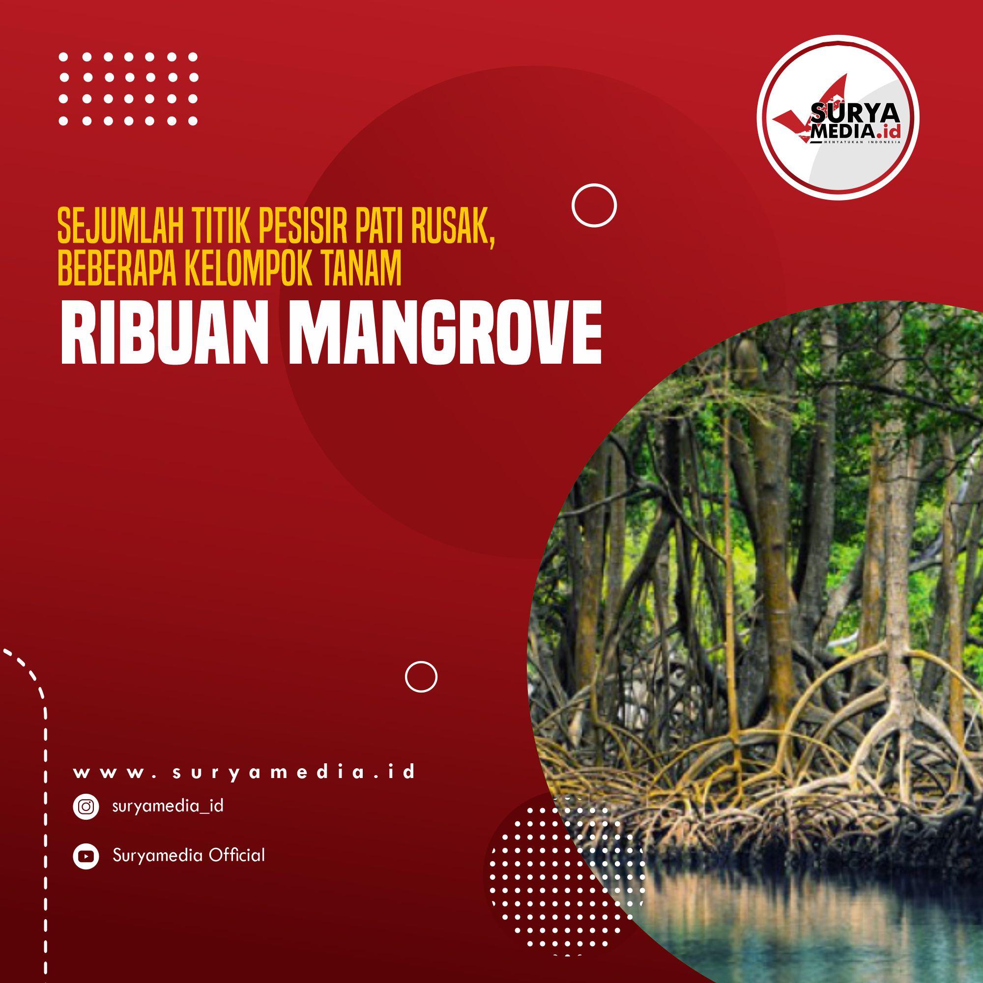 Sejumlah Titik Pesisir Pati Rusak, Beberapa Kelompok Tanam Ribuan Mangrove A