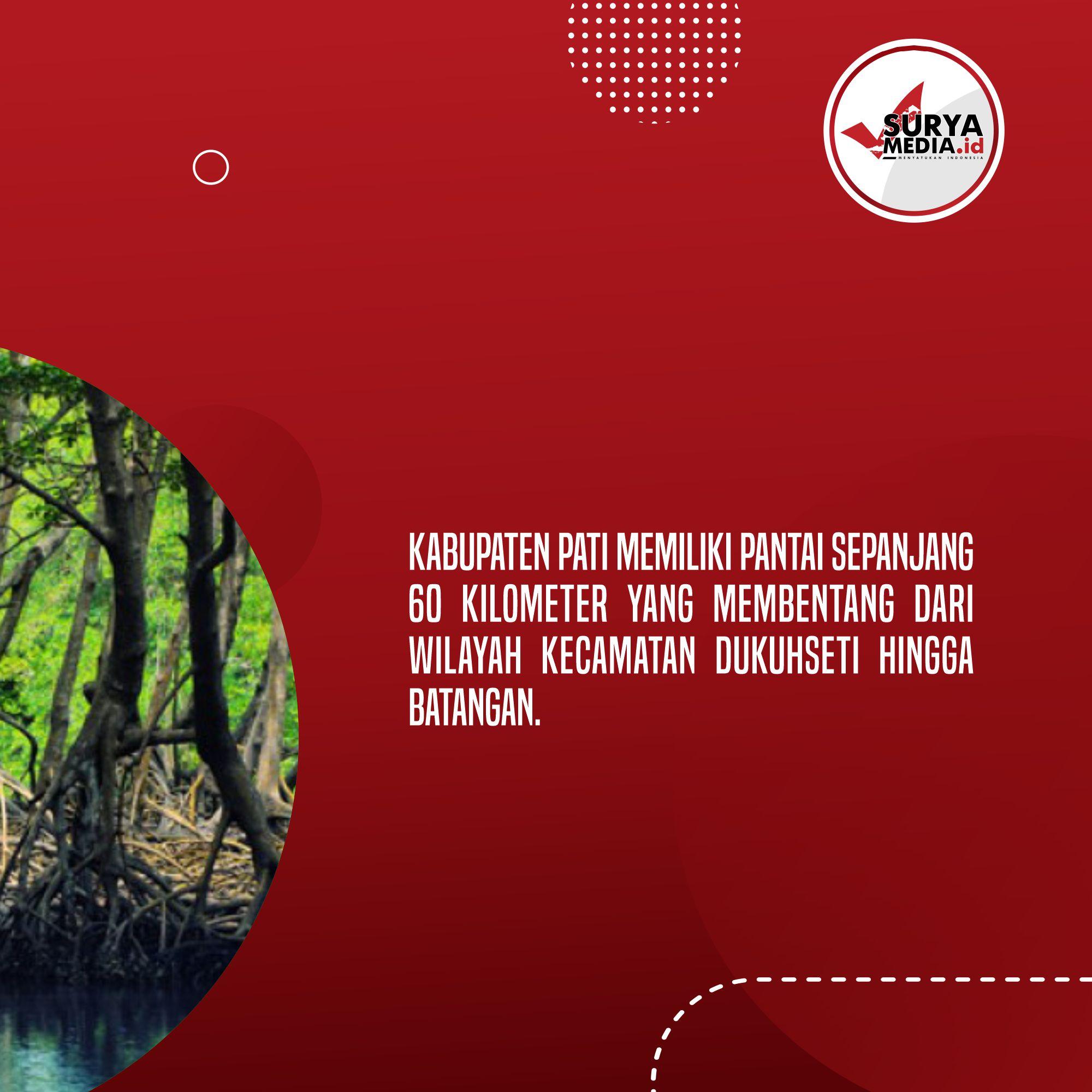 Sejumlah Titik Pesisir Pati Rusak, Beberapa Kelompok Tanam Ribuan Mangrove B
