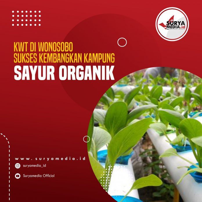 KWT di Wonosobo Sukses Kembangkan Kampung Sayur Organik