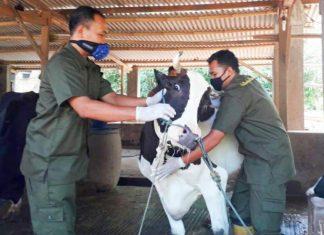 Dinperpa Akan Gelar Vaksinasi Rabies dan Pengobatan Hewan Gratis